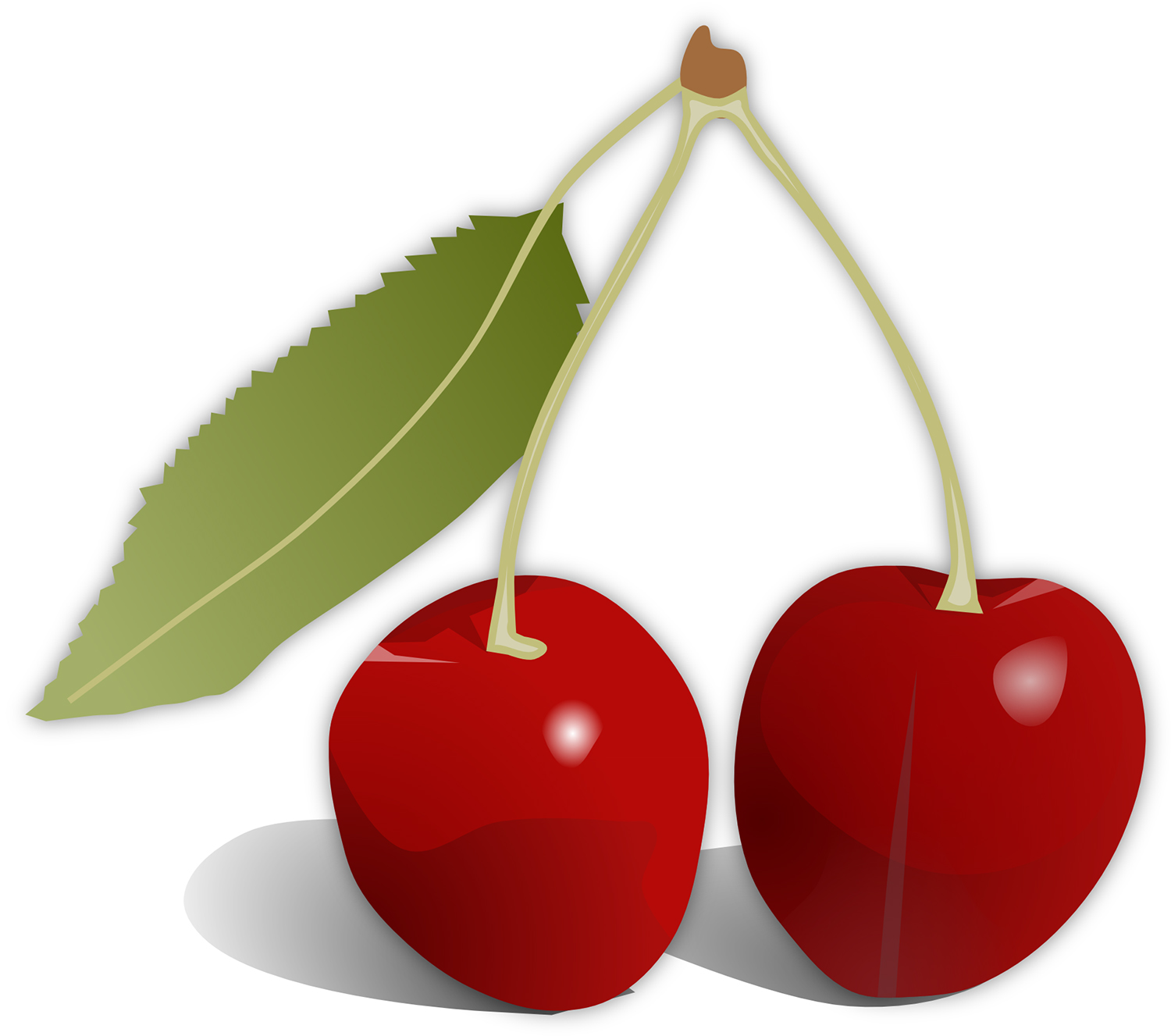 Red Cherries With Leaves Vector Image