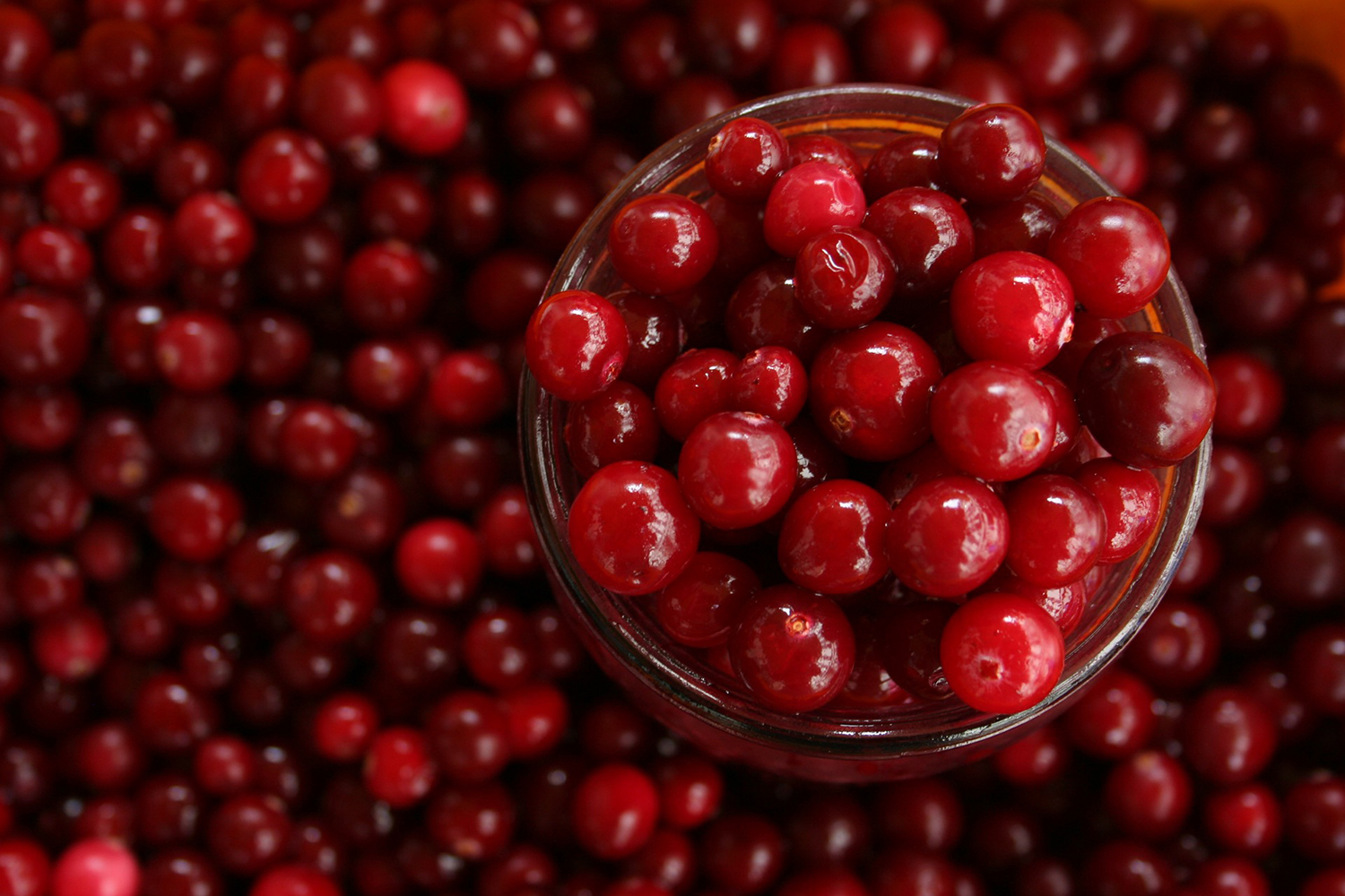 Cranberries Up-close Shot. Nutritious Fruits