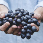 Man Hands Holding Grapes. Healthy Eating Concept