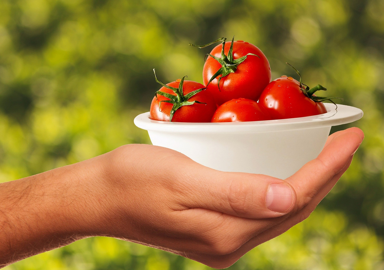 Hand Holding A Bowl of Raw Tomatoes